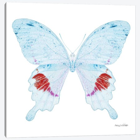 Miss Butterfly Hermosanus X-Ray (White Edition) Canvas Print #PHD319} by Philippe Hugonnard Canvas Artwork