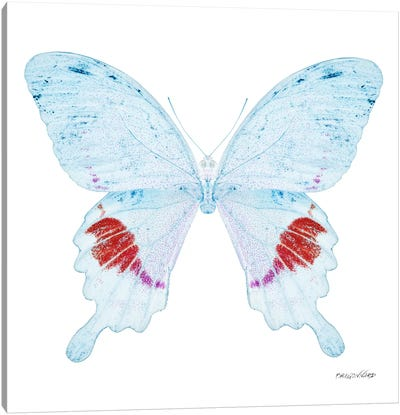 Miss Butterfly Hermosanus X-Ray (White Edition) Canvas Art Print