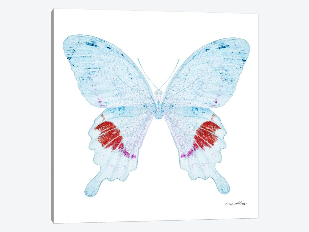 Miss Butterfly Hermosanus X-Ray (White Edition) by Philippe Hugonnard 1-piece Canvas Art