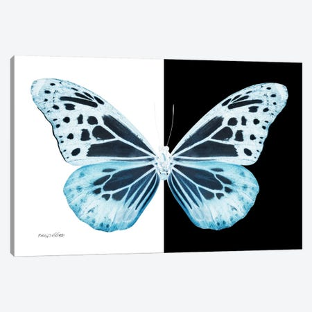 Miss Butterfly Melaneus X-Ray (B&W Edition) Canvas Print #PHD320} by Philippe Hugonnard Canvas Art Print
