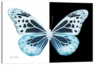 Miss Butterfly Melaneus X-Ray (B&W Edition) Canvas Art Print