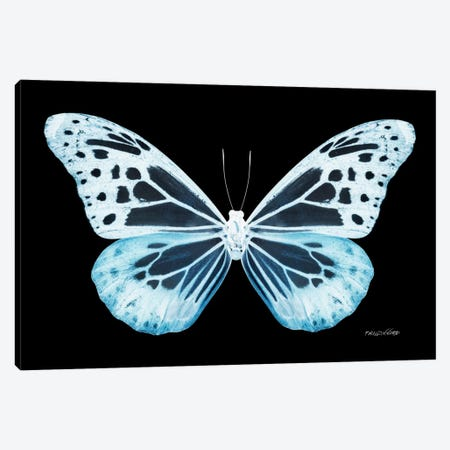 Miss Butterfly Melaneus X-Ray (Black Edition) Canvas Print #PHD321} by Philippe Hugonnard Canvas Art Print