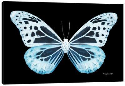 Miss Butterfly Melaneus X-Ray (Black Edition) Canvas Art Print