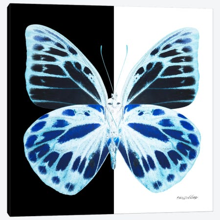 Miss Butterfly Prioneris X-Ray (B&W Edition) Canvas Print #PHD322} by Philippe Hugonnard Art Print