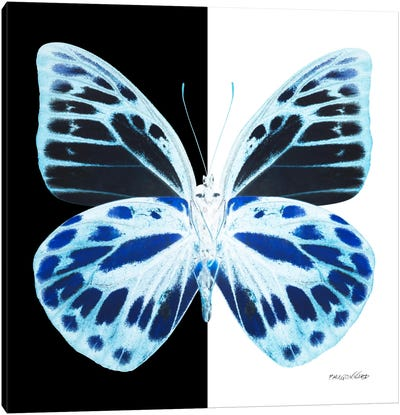 Miss Butterfly Prioneris X-Ray (B&W Edition) Canvas Art Print