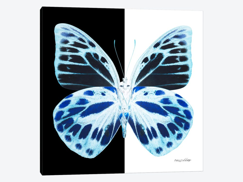Miss Butterfly Prioneris X-Ray (B&W Edition) by Philippe Hugonnard 1-piece Canvas Wall Art
