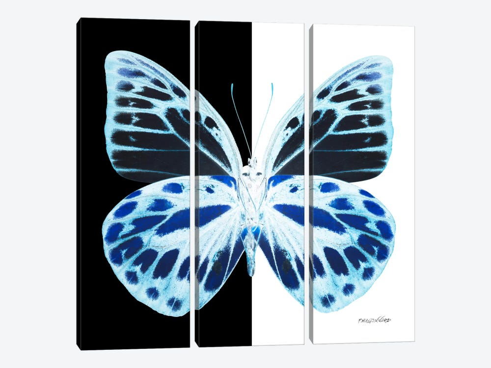 Miss Butterfly Prioneris X-Ray (B&W Edition) by Philippe Hugonnard 3-piece Canvas Artwork