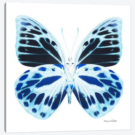 Miss Butterfly Prioneris X-Ray (White Edition) Canvas Print #PHD323} by Philippe Hugonnard Canvas Art Print