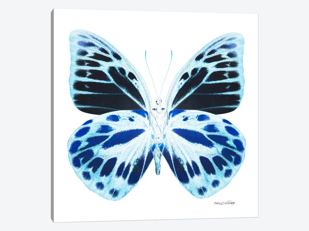 Miss Butterfly Prioneris X-Ray (White Edition) by Philippe Hugonnard 1-piece Art Print