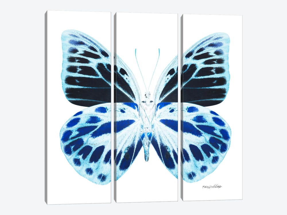 Miss Butterfly Prioneris X-Ray (White Edition) by Philippe Hugonnard 3-piece Art Print