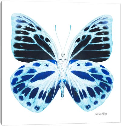 Miss Butterfly Prioneris X-Ray (White Edition) Canvas Art Print