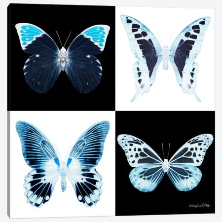 Miss Butterfly X-Ray I Canvas Print #PHD324} by Philippe Hugonnard Canvas Art