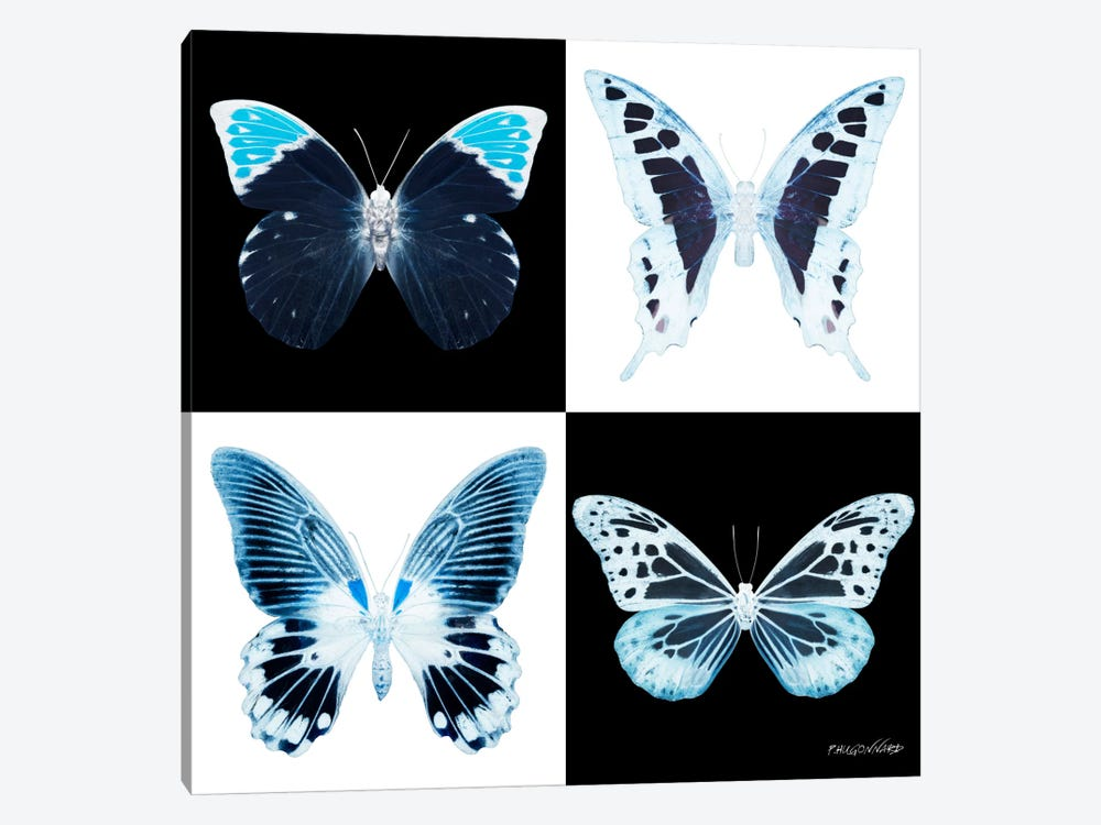 Miss Butterfly X-Ray I by Philippe Hugonnard 1-piece Canvas Artwork