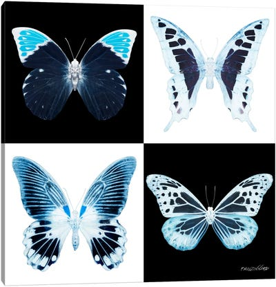 Miss Butterfly X-Ray I Canvas Art Print