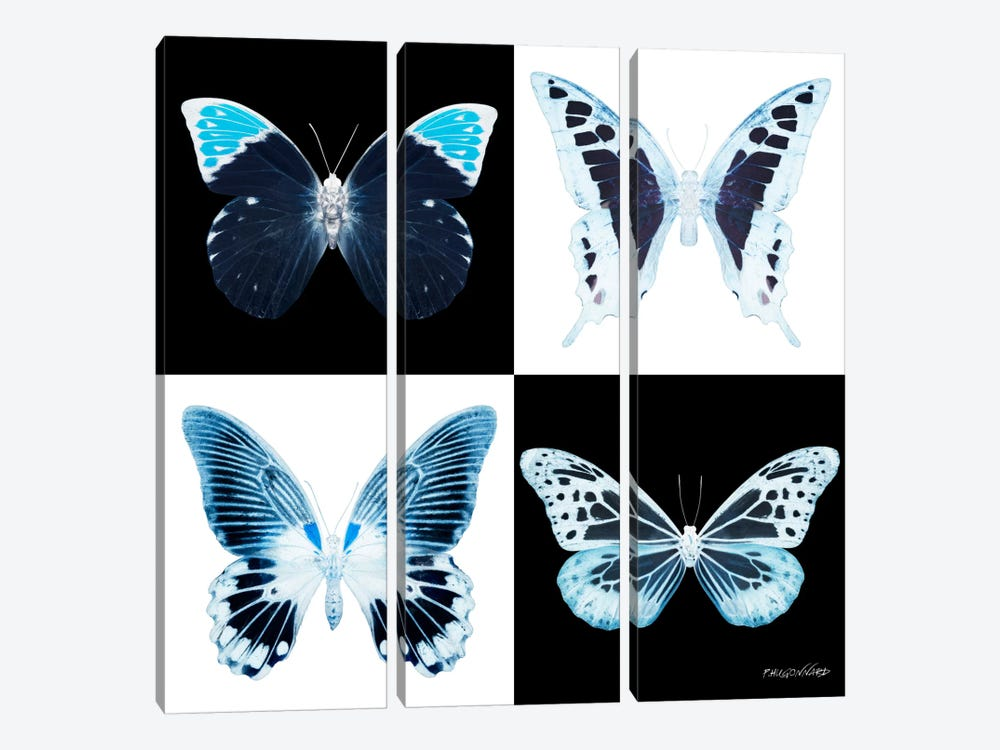 Miss Butterfly X-Ray I by Philippe Hugonnard 3-piece Canvas Art