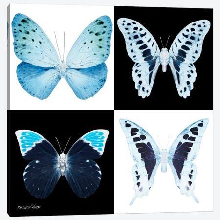 Miss Butterfly X-Ray II Canvas Print #PHD325} by Philippe Hugonnard Canvas Wall Art