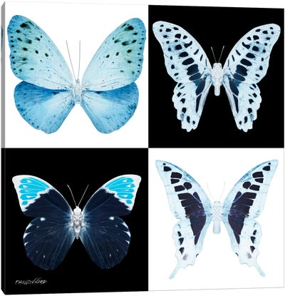 Miss Butterfly X-Ray II Canvas Art Print