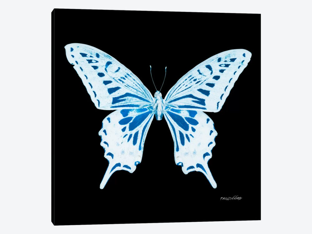Miss Butterfly Xuthus X-Ray (Black Edition) by Philippe Hugonnard 1-piece Canvas Art