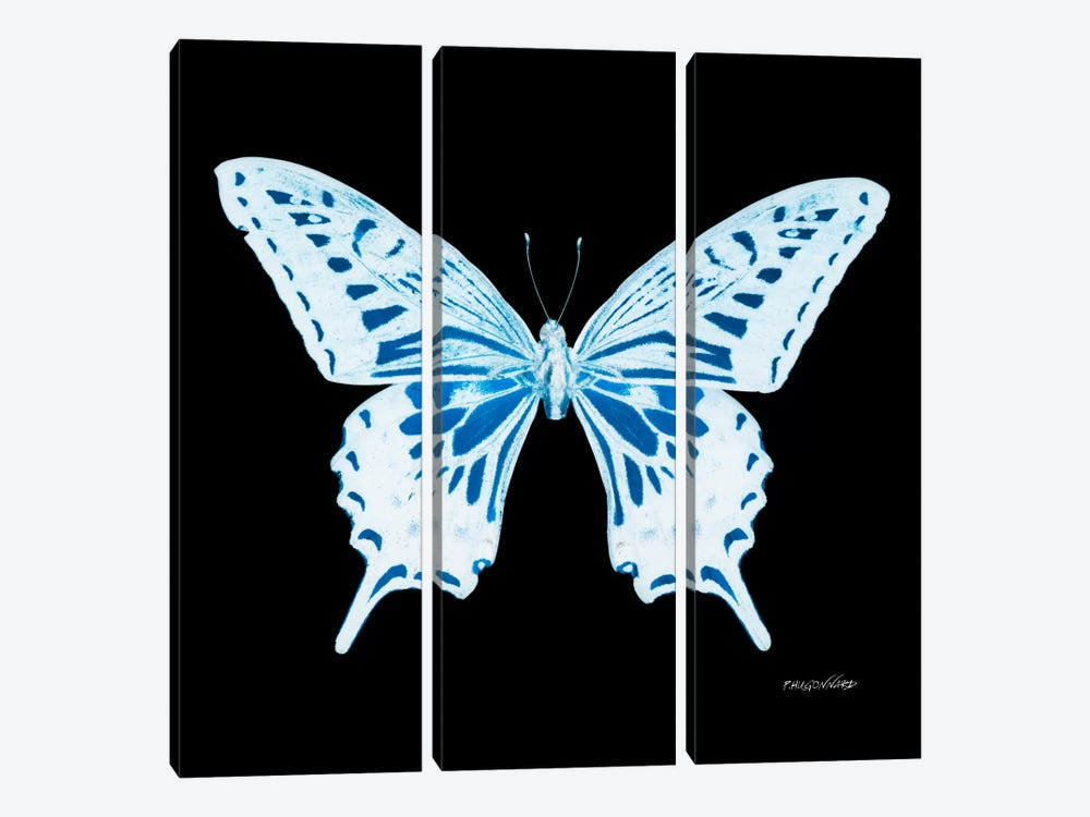 Miss Butterfly Xuthus X-Ray (Black Edition) by Philippe Hugonnard 3-piece Canvas Art
