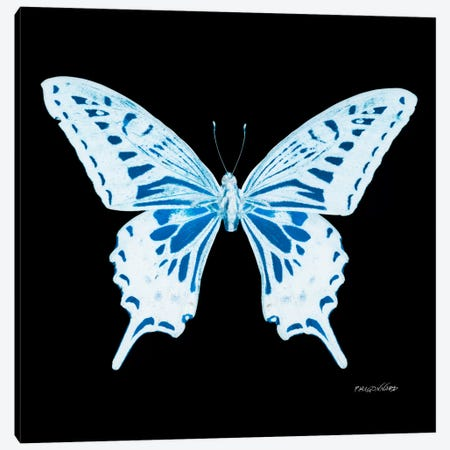 Miss Butterfly Xuthus X-Ray (Black Edition) Canvas Print #PHD326} by Philippe Hugonnard Canvas Wall Art