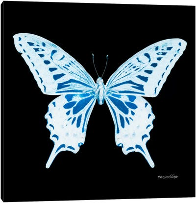Miss Butterfly Xuthus X-Ray (Black Edition) Canvas Art Print