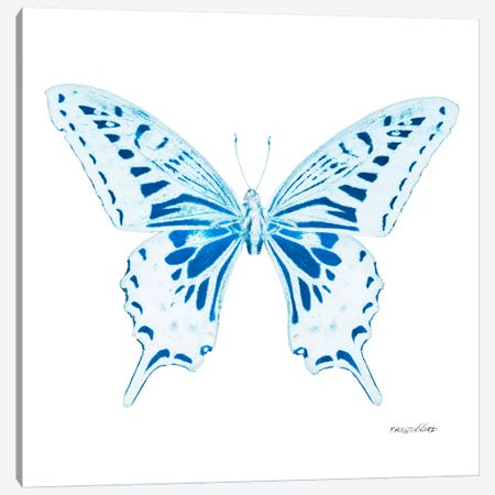 Miss Butterfly Xuthus X-Ray (White Edition) Canvas Print #PHD327} by Philippe Hugonnard Canvas Art