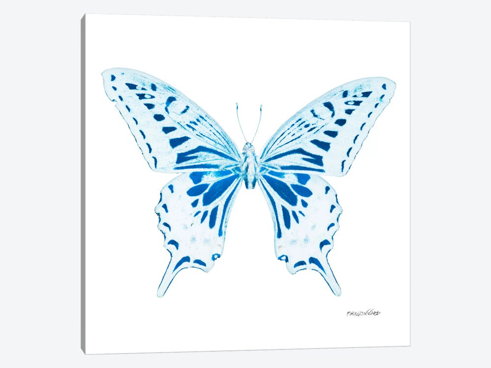 Miss Butterfly Xuthus X-Ray (White Edition) 1-piece Canvas Art Print