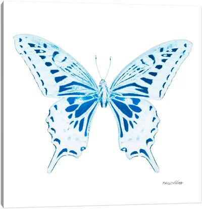 Miss Butterfly Xuthus X-Ray (White Edition) Canvas Art Print