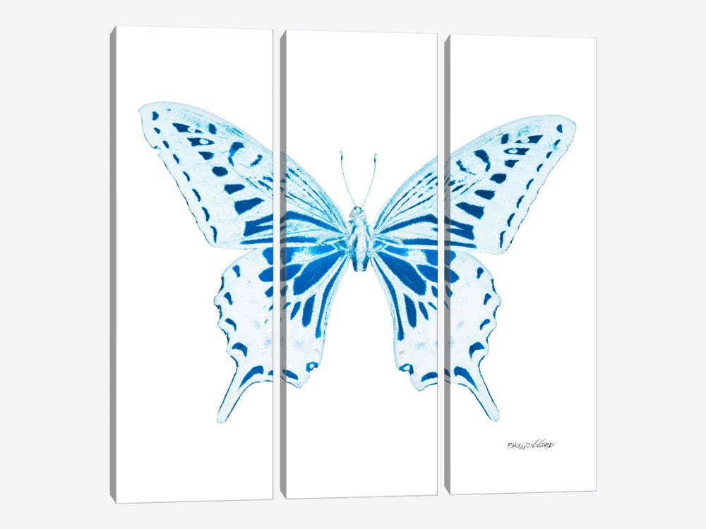 Miss Butterfly Xuthus X-Ray (White Edition) by Philippe Hugonnard 3-piece Canvas Print