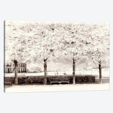 Between Four Trees Canvas Print #PHD658} by Philippe Hugonnard Art Print