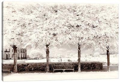 Between Four Trees Canvas Art Print