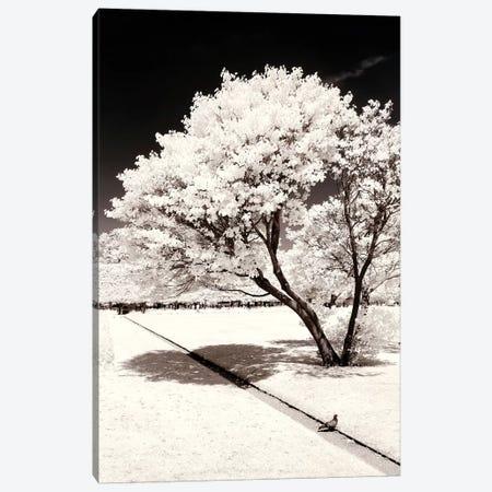 Straight Line Canvas Print #PHD690} by Philippe Hugonnard Canvas Print