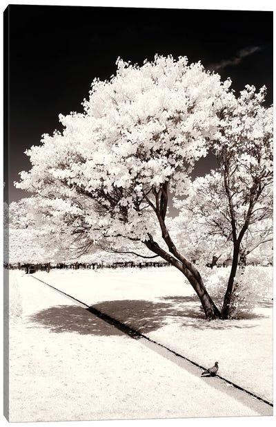 Straight Line Canvas Art Print