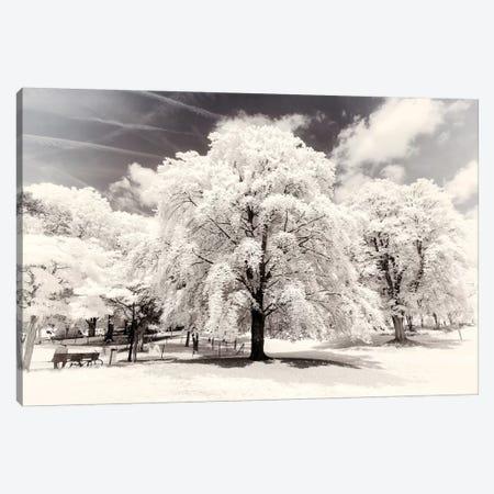 White Trees Canvas Print #PHD696} by Philippe Hugonnard Canvas Artwork