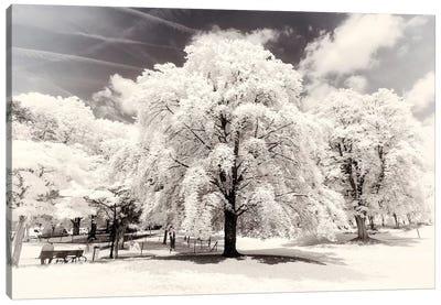 White Trees Canvas Art Print