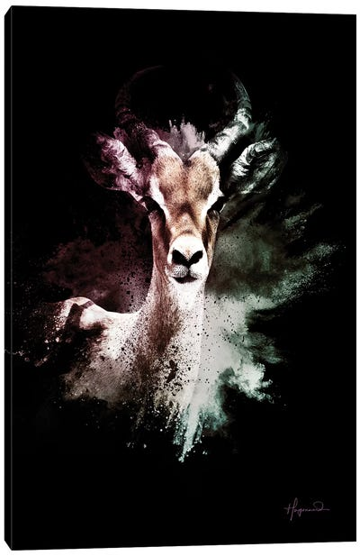 The Antelope Canvas Art Print