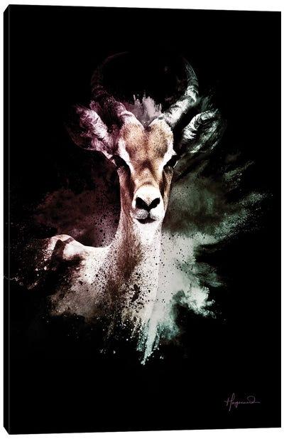 The Antelope Canvas Art Print