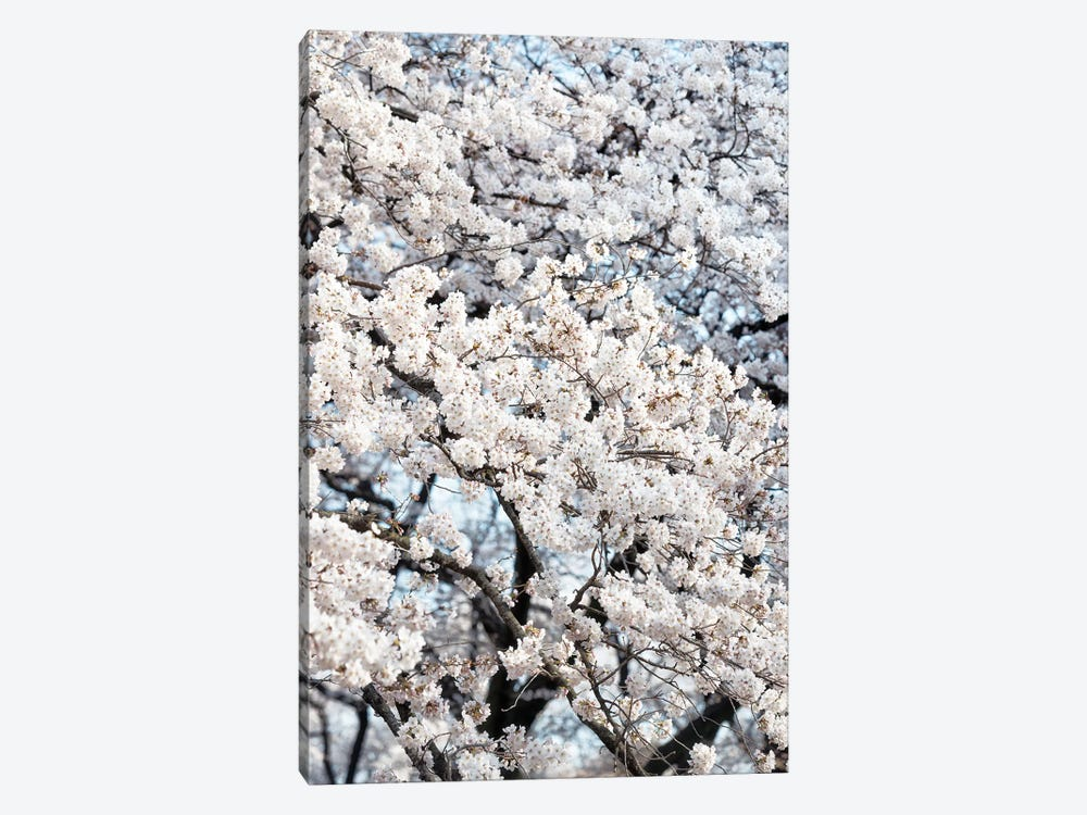 Sakura Cherry Blossoms by Philippe Hugonnard 1-piece Canvas Art