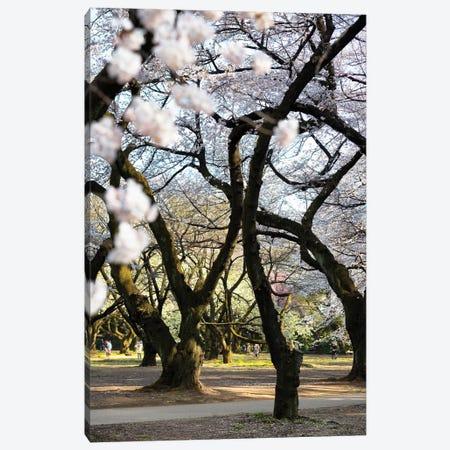 Japanese Trees Canvas Print #PHD831} by Philippe Hugonnard Canvas Art Print