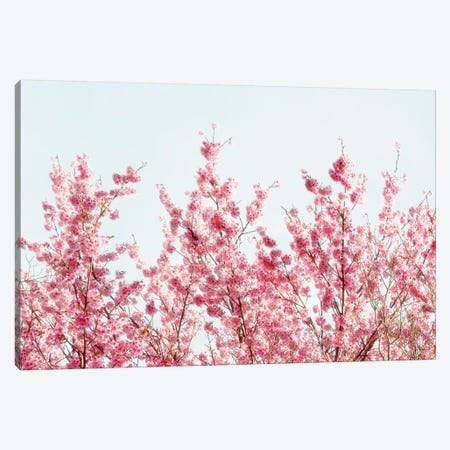Pink Sakura Tree III Canvas Print #PHD835} by Philippe Hugonnard Canvas Art
