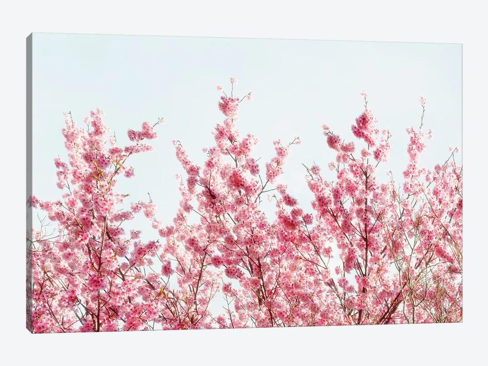 Pink Sakura Tree III by Philippe Hugonnard 1-piece Canvas Print