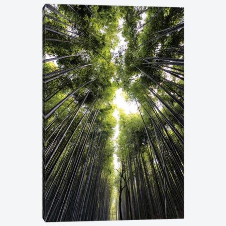 Sagano Bamboo Forest Canvas Print #PHD836} by Philippe Hugonnard Canvas Artwork