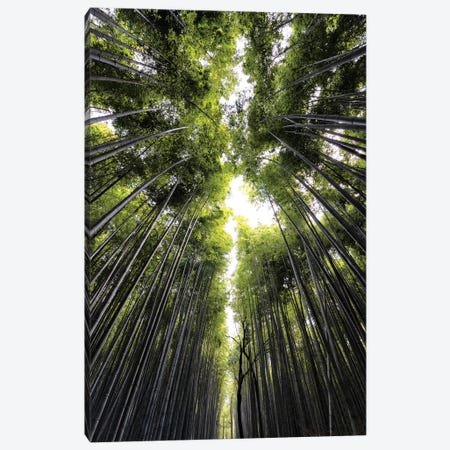 Sagano Bamboo Forest Canvas Print #PHD836} by Philippe Hugonnard Canvas Artwork