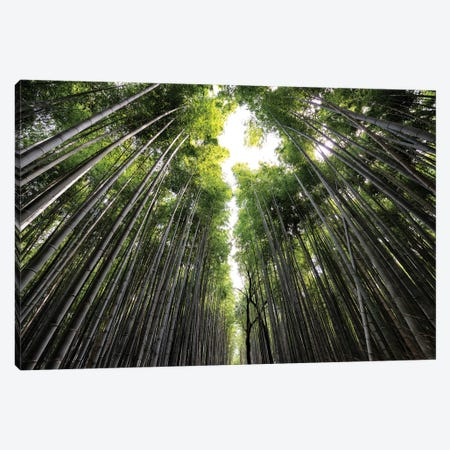Sagano Bamboo Forest II Canvas Print #PHD837} by Philippe Hugonnard Canvas Artwork