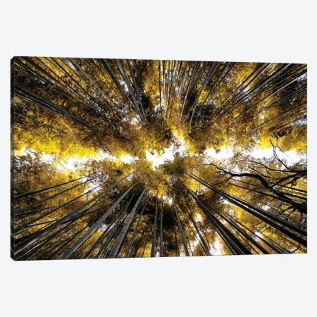 Arashiyama Bamboo Forest I Canvas Print #PHD840} by Philippe Hugonnard Canvas Artwork