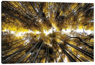 Arashiyama Bamboo Forest I Canvas Art Print