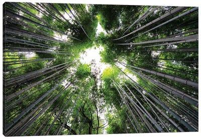 Arashiyama Bamboo Forest II Canvas Art Print