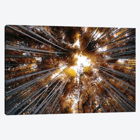 Arashiyama Bamboo Forest III Canvas Print #PHD842} by Philippe Hugonnard Canvas Artwork