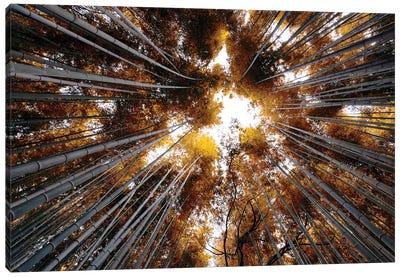Arashiyama Bamboo Forest III Canvas Art Print