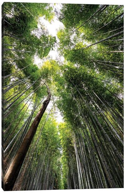 Arashiyama Bamboo Forest IV Canvas Art Print